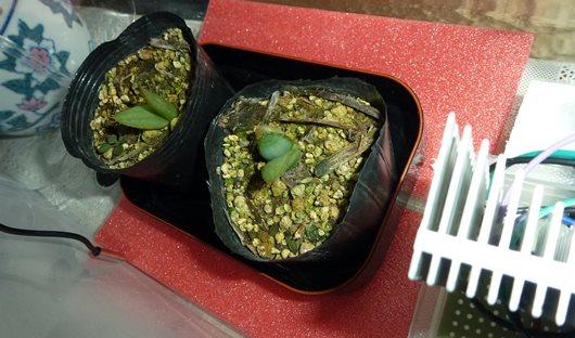 植物育成用LED テスト中 03.JPG