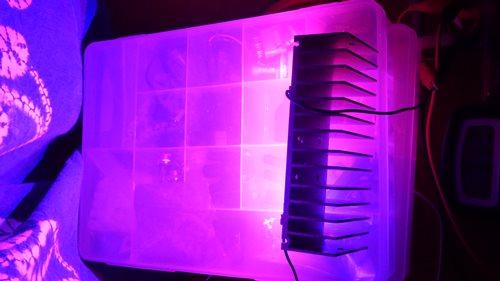 植物育成用LED実験①_01.JPG